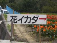 Ikada